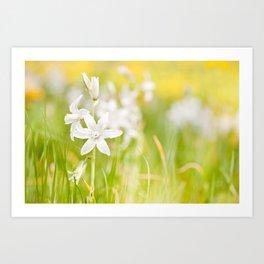 White Ornithogalum nutans pretty bloom Art Print
