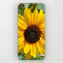 Sunflower nature photo iPhone Skin