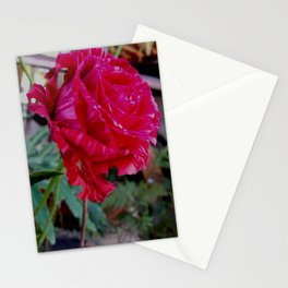 lonely rose Stationery Cards