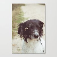 border collie Canvas Prints featuring Border Collie by Laura Baay