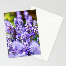 Bunch of beautiful lavender flowers in close-up from France Stationery Cards