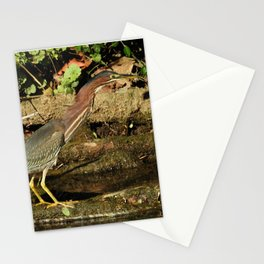 Green Heron Extension Stationery Cards