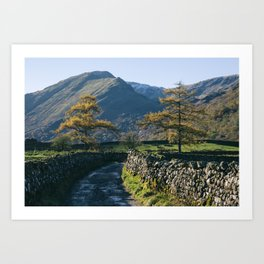 Larch trees and remote road to Thorneythwaite Farm, Borrowdale. Lake District, UK. Art Print