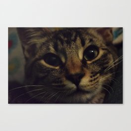 Cat named Zoey Canvas Print