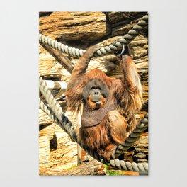 Orangutan. Canvas Print