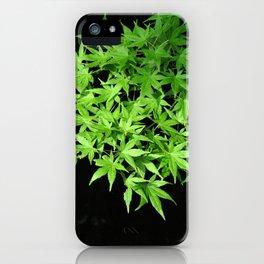 Japanese Maple Fresh Leaves iPhone Case
