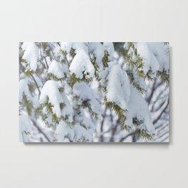 Winter's Pine 9 Metal Print