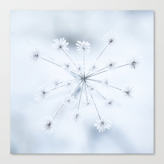 Beautiful Dry Flower with Ice Crystals Canvas Print