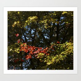 The Leaves Were Smiling at Me, and I Didn't Even Know Art Print