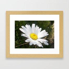 Close Up of a Margarite Daisy Flower Framed Art Print