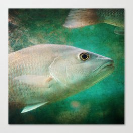 One Eye, One Tail Canvas Print