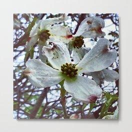 Dogwood Blossoms in the Rain Metal Print