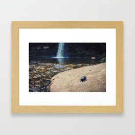 Bettle resting by a waterfall Framed Art Print