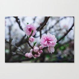 Sakura III Canvas Print