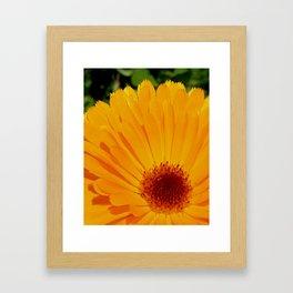 Orange Pot Marigold Framed Art Print