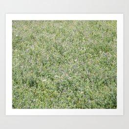 5 Lavender & White Flowers In Green Field 24M adj ASBU 120x80 ppi150 Stamp ASBU 104x88 125ppi 49.5? Art Print