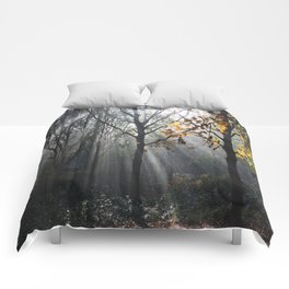 Autumn Sunbeams Comforters