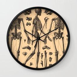 Vintage Human Skeleton Anatomy Diagram (1907) Wall Clock