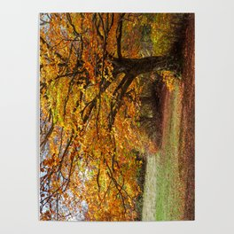 Colorful autumn in the forest of Canfaito park, Italy Poster