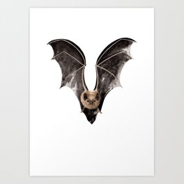 Long Tailed Bat / Pekapeka Art Print