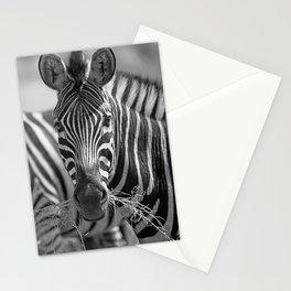Zebra with grass, Africa wildlife Stationery Cards