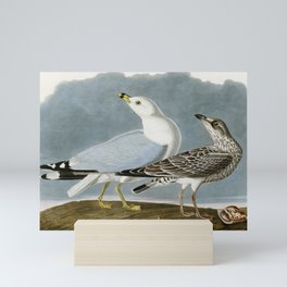 Vintage Seagull Illustration - Audubon Mini Art Print
