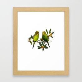 Budgies in Kumquat Tree Framed Art Print