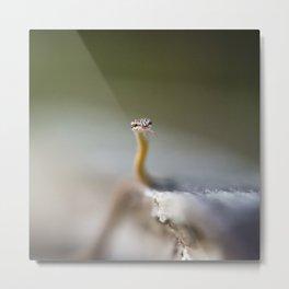 Snake at Bako National Park, Borneo Metal Print