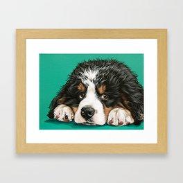 Cute Bernese Mountain Dog Puppy Pet Portrait Framed Art Print