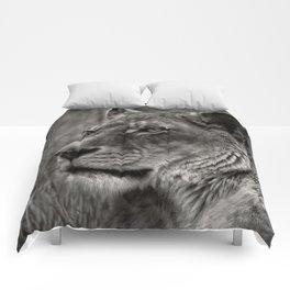 Lioness Portrait Comforters