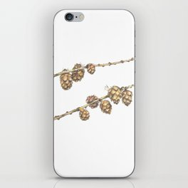 Conifer tree with cones iPhone Skin