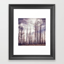 Highland Ponderosas Framed Art Print