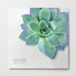 Succulent botanic print grey Metal Print