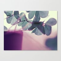 clover Canvas Prints featuring clover by Ingrid Beddoes
