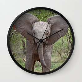 Small Elephant - Africa wildlife Wall Clock