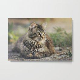 Cat Lying Down Metal Print