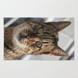 Beautiful Eyed Tabby Cat  Rug