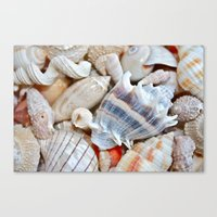 shells Canvas Prints featuring Shells by Taylor Payne