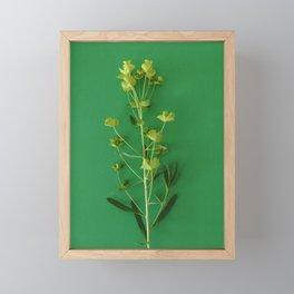Green summer   Floral Photography Framed Mini Art Print