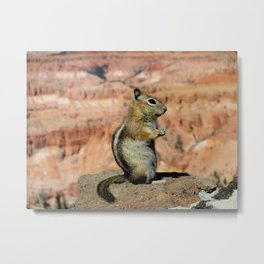 Golden Mantled Ground Squirrel & The Canyon Metal Print