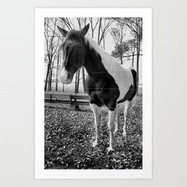 Spotted Horse (bw) Art Print