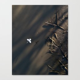 heron from above Canvas Print