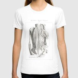Human Anatomy Art Print WOMEN BACK MUSCLE Vintage Anatomy, doctor medical art, Antique Book Plate T-shirt