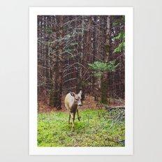 deer 2.  Art Print