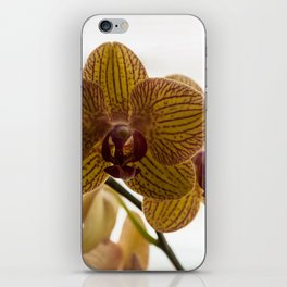 Red Veined Orchid iPhone Skin