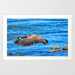 Flying 1X Art Print