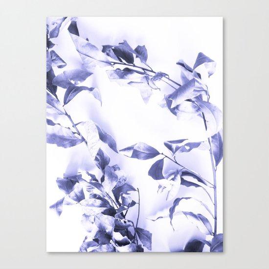 Bay leaves 3 Canvas Print