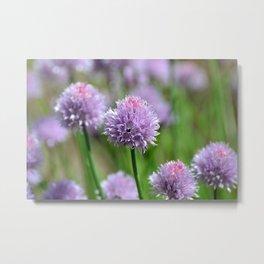 A subtle kick of Lavender.... Metal Print