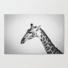 Chrome Giraffe Canvas Print
