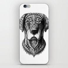 Labrador iPhone & iPod Skin